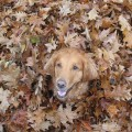 Autumn Pet Safety Tips