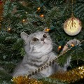 Winter Holiday Pet Safety Tips