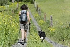 dog walking in wayne pa