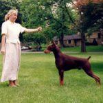 mainline dog training