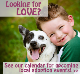 See our calendar for upcoming adoption events!