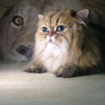 the main lion