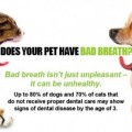 The Importance of Pet Dental Care