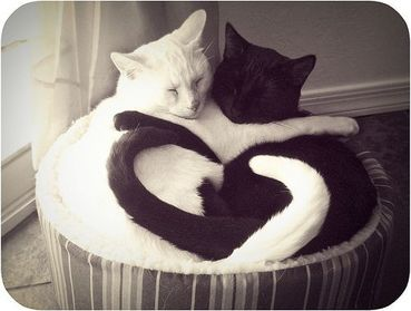 cat_tails_heart