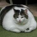 4 Steps To Help Your Overweight Pet!