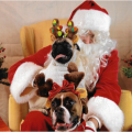 Santa Pet Photos in Wayne, PA