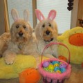 Easter, Spring Pet Hazards