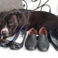 DogsHome Collecting Shoes