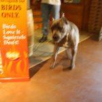 pet wellness 10