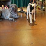 pet wellness 12