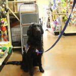 pet wellness 14