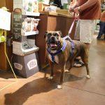 pet wellness 4