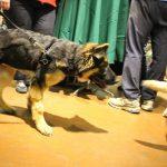 pet wellness 5