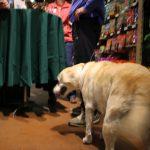 pet wellness 6