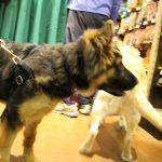 pet wellness 7