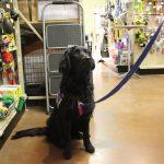 pet wellness 8