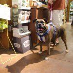 pet wellness 9
