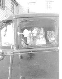 TBT Dog driving in car