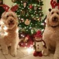 4 Holiday Pet Safety Tips