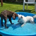 6 Tips to Avoid Heat Related Pet Problems