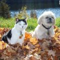 Pets and Fall Toxins