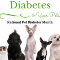 Diabetes: Is Your Pet at Risk
