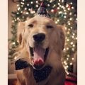 Protect Your Pet this New Year's Eve