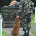 Remembering War Dogs