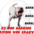 Tips for dealing with a Neighbor's Barking Dog