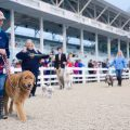 Dog Show at Devon