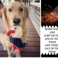 4th of July Pet Preparedness