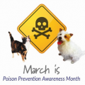 Pet Poison Prevention Month