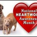 Heartworms: Know the Facts