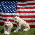 10 Pet Tips for 4th of July